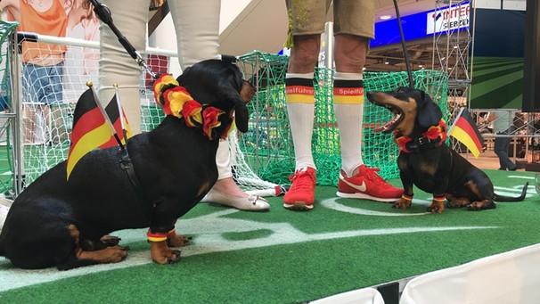 Животные-оракулы на ЧМ-2018 по футболу - Страница 2 Passau10