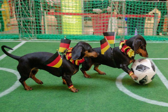 Животные-оракулы на ЧМ-2018 по футболу - Страница 2 W950_h16