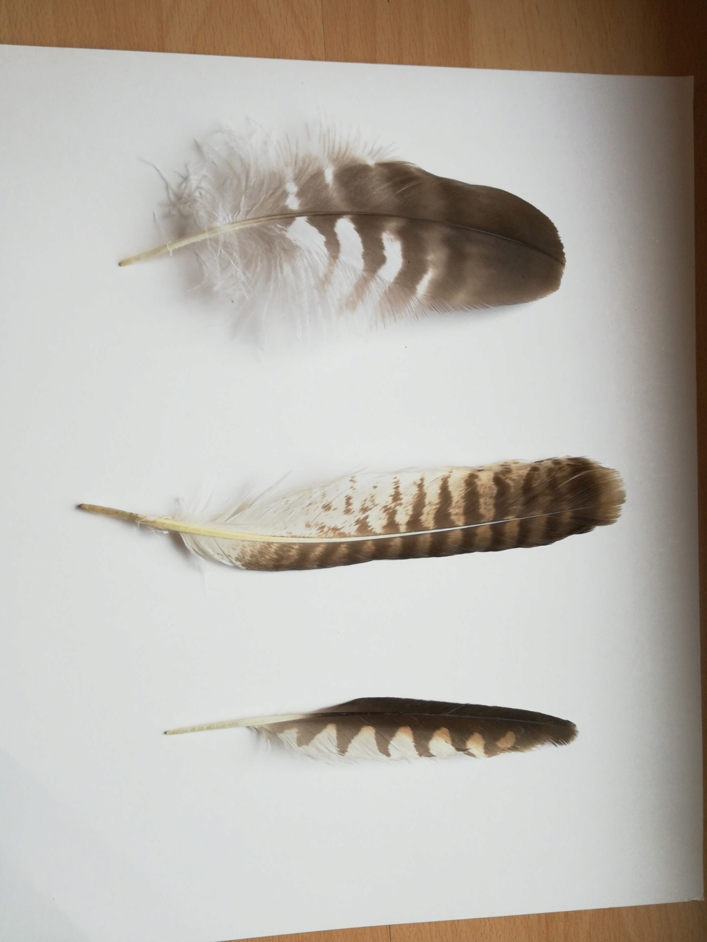 3 plumes...  15344910