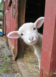 Paimen ja lammas 8b8b2e11