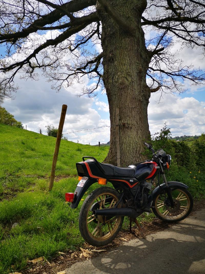 Yamaha RD 50 MX Img_2097