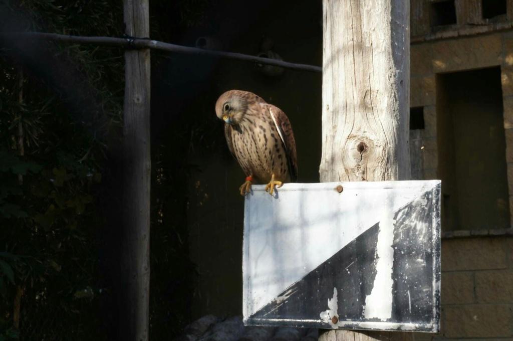 Фотографии животных в природе с обязательным указанием автора -huj-e10