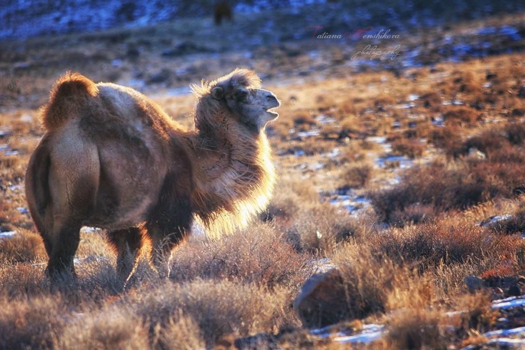 Фотографии животных в природе с обязательным указанием автора 2bbm7t10