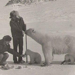 Белые медведи на фото с человеком 3crjlg10