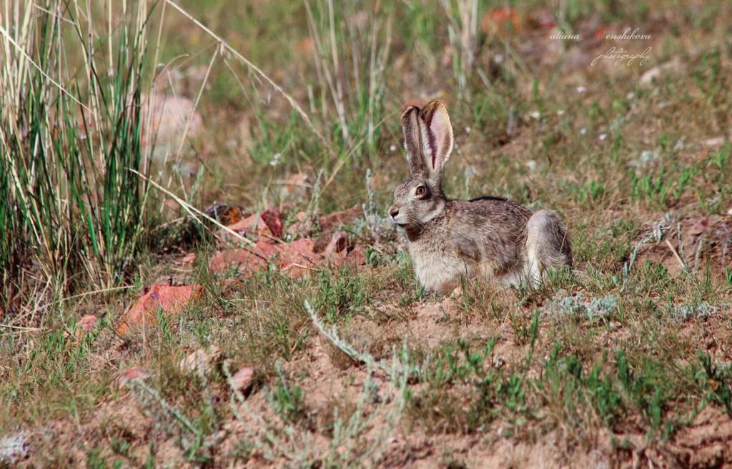 Фотографии животных в природе с обязательным указанием автора 4lkleb10