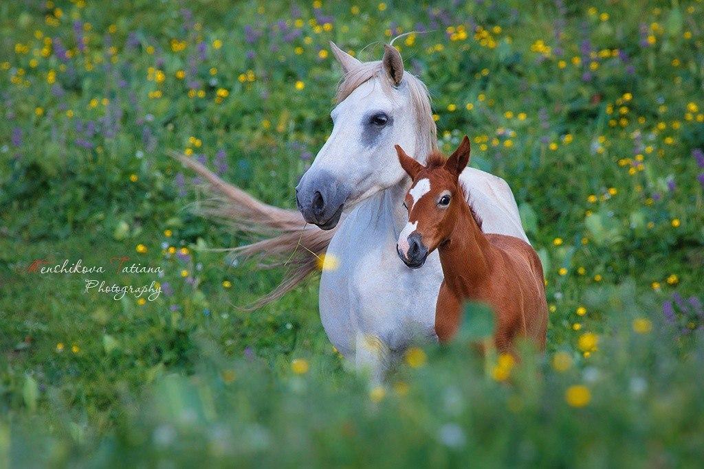 Фотографии животных в природе с обязательным указанием автора 8mj22p10