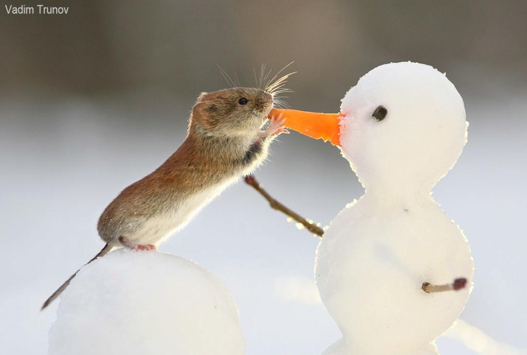Фотографии животных в природе с обязательным указанием автора 9_dnep10