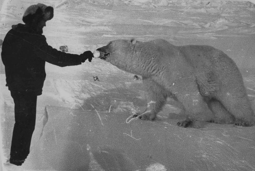 Белые медведи на фото с человеком 9sjvcg10