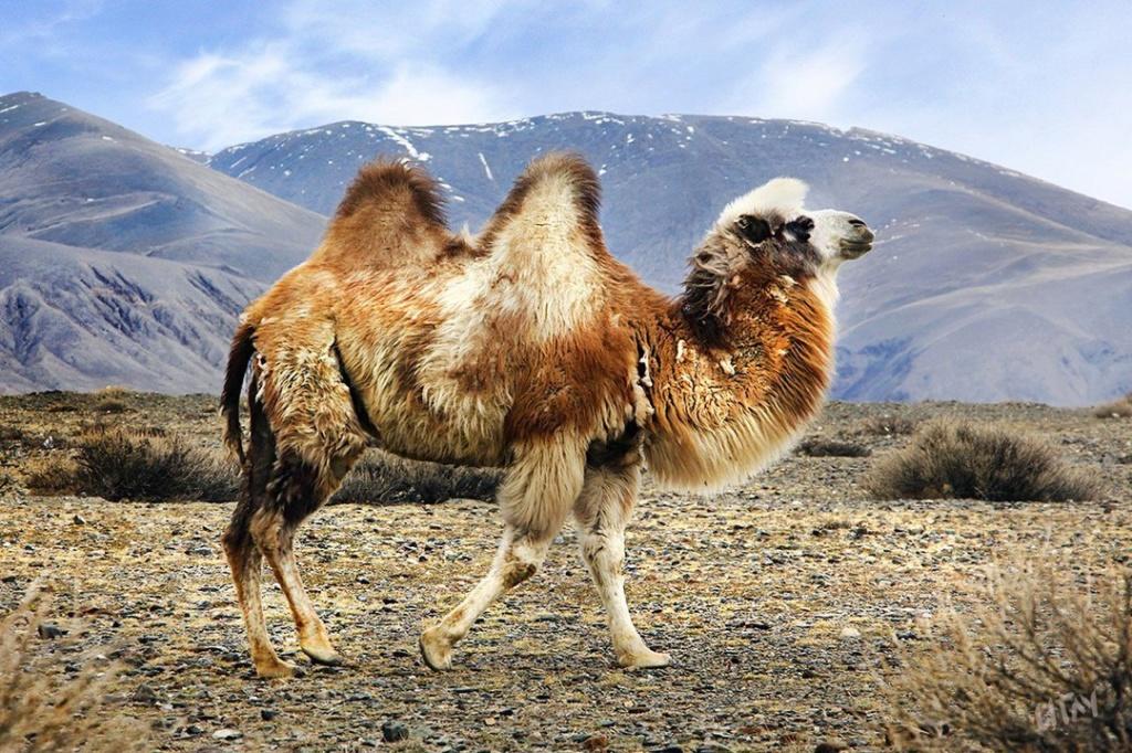 Фотографии животных в природе с обязательным указанием автора B1rip810