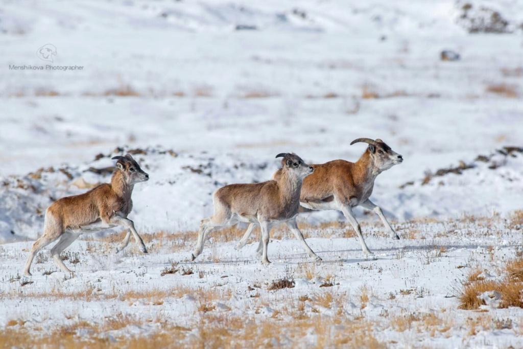 Фотографии животных в природе с обязательным указанием автора Bjyxbh10