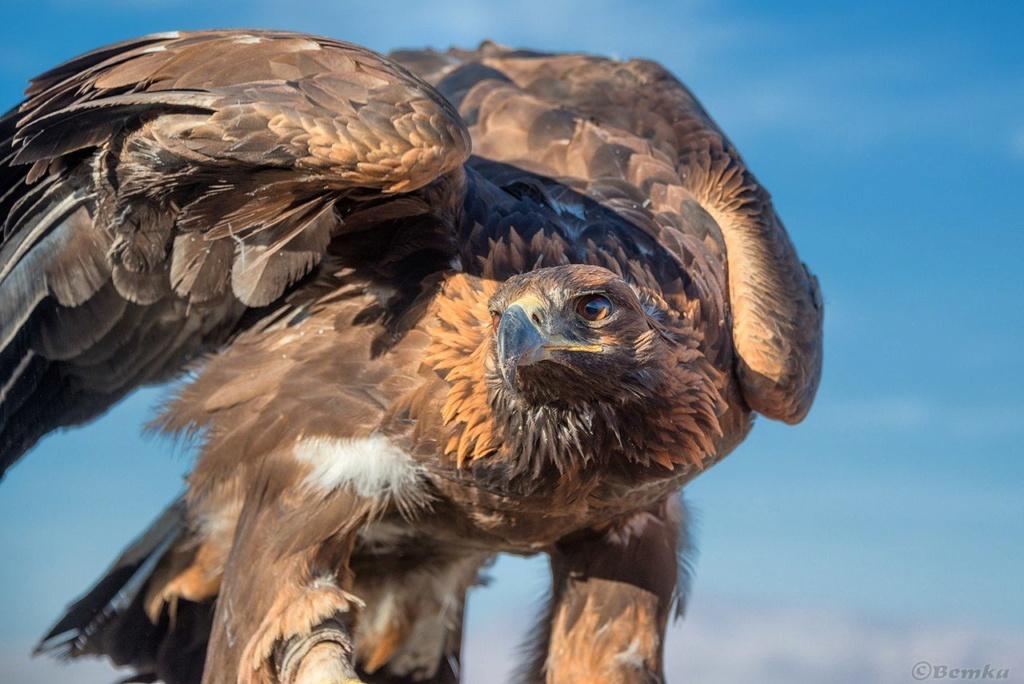 Фотографии животных в природе с обязательным указанием автора C3fzye10