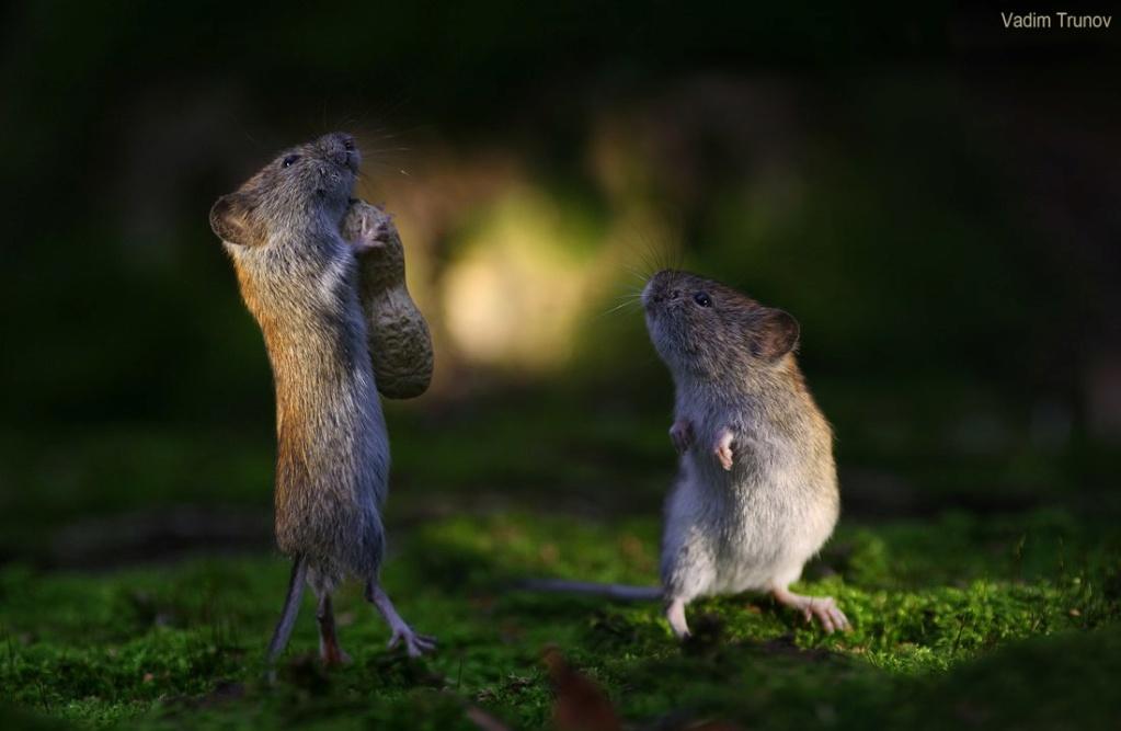 Фотографии животных в природе с обязательным указанием автора Ch913p10