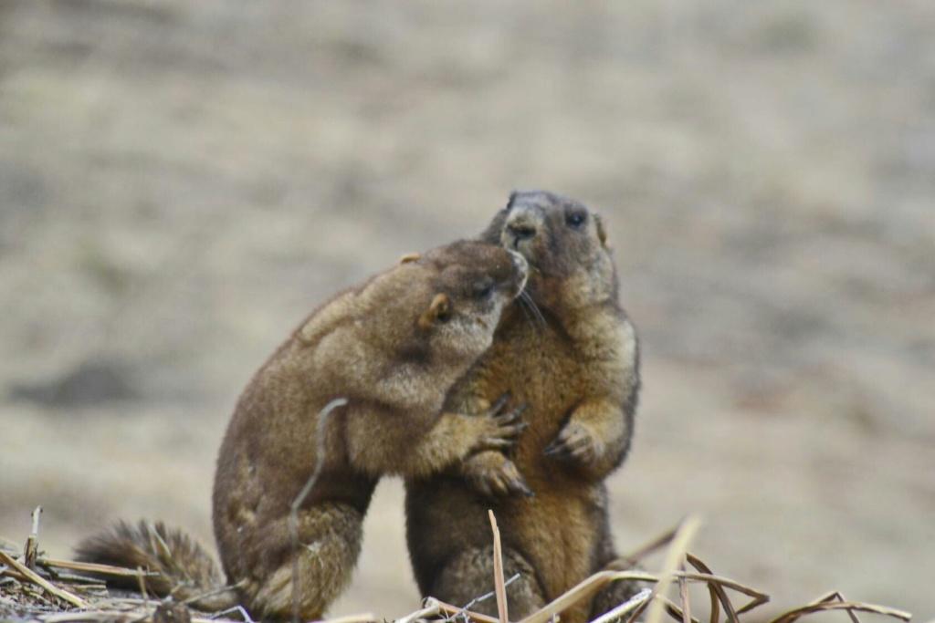 Фотографии животных в природе с обязательным указанием автора Czm8hg10