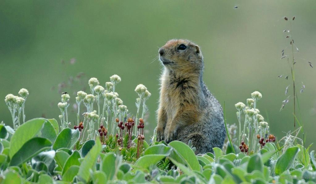 Фотографии животных в природе с обязательным указанием автора Dqzxye10