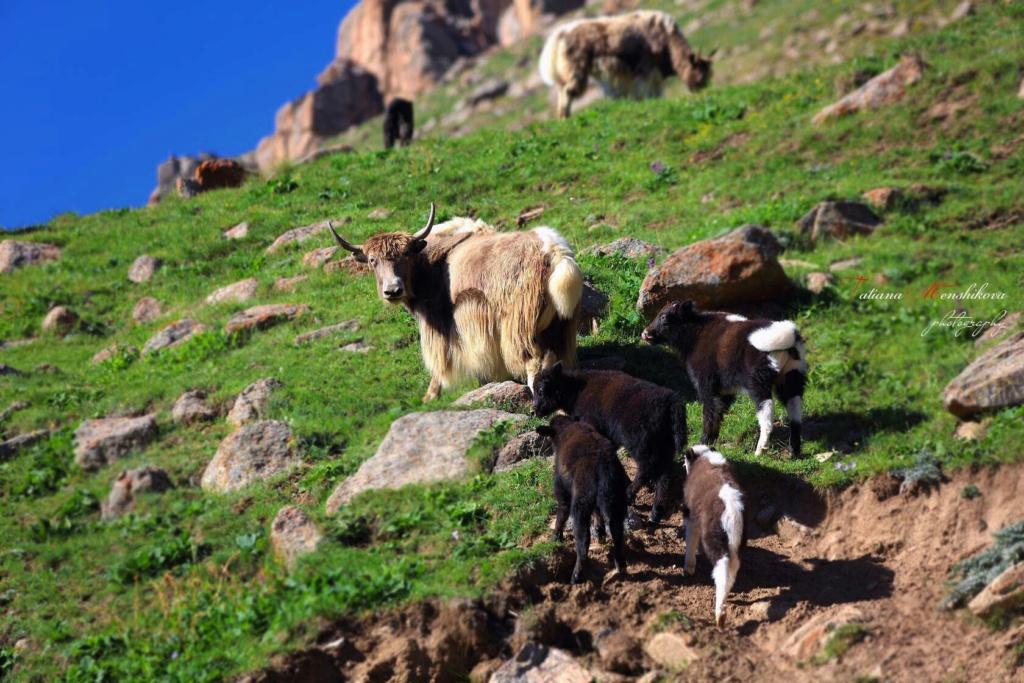 Фотографии животных в природе с обязательным указанием автора Drfqvr10