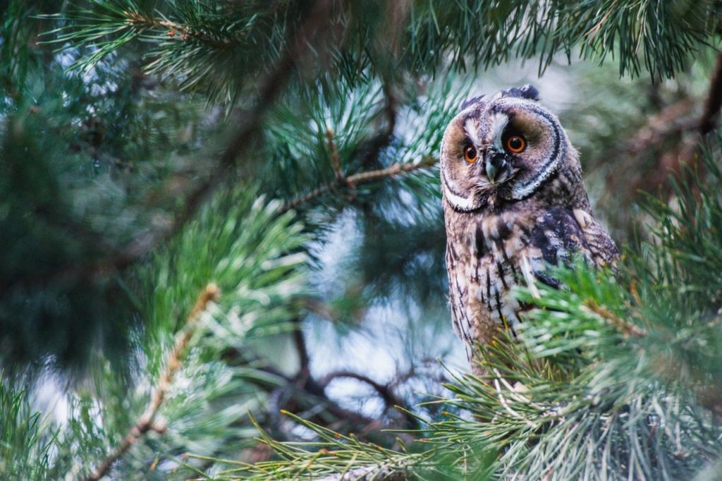 Фотографии животных в природе с обязательным указанием автора Eqaxjd10