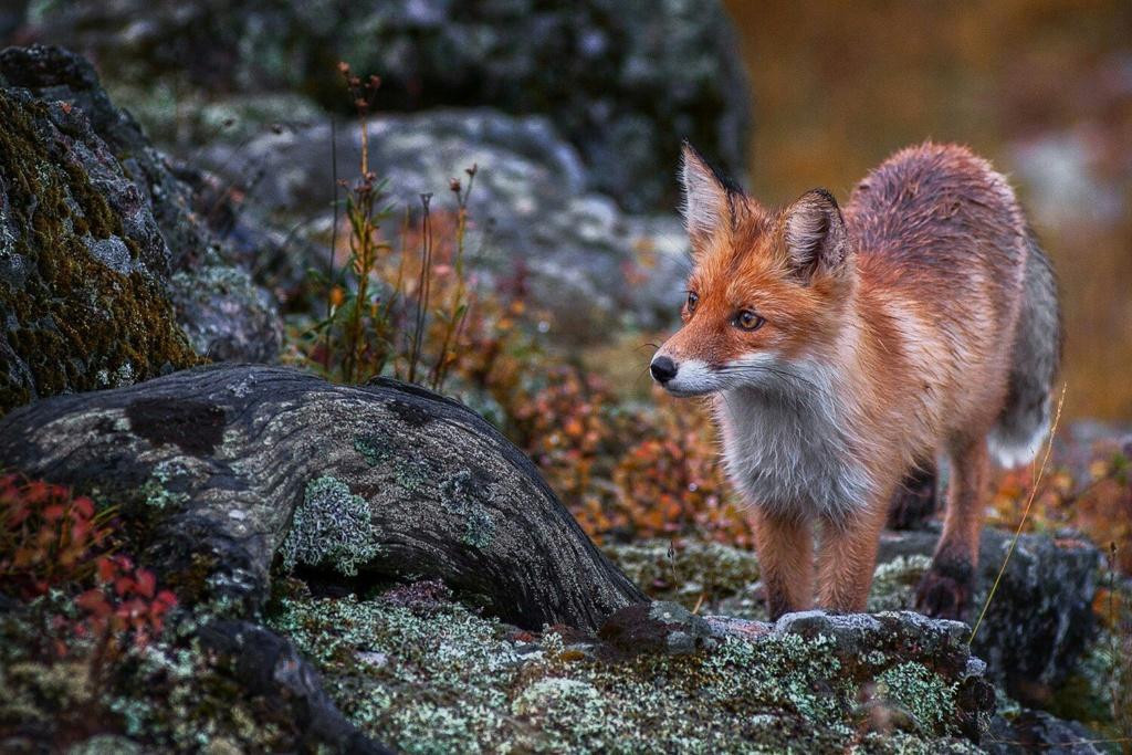 Фотографии животных в природе с обязательным указанием автора Hlda7j10