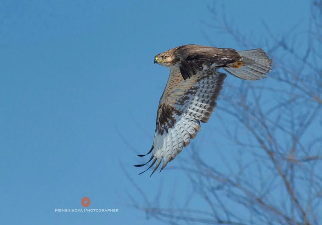 Фотографии животных в природе с обязательным указанием автора I0dnna10