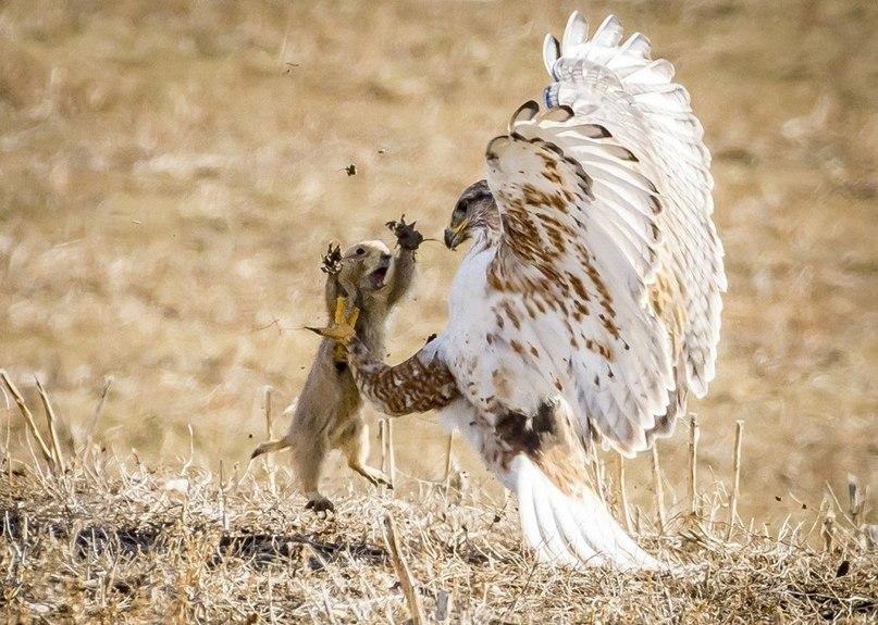 Фотографии животных в природе с обязательным указанием автора Jet8y510