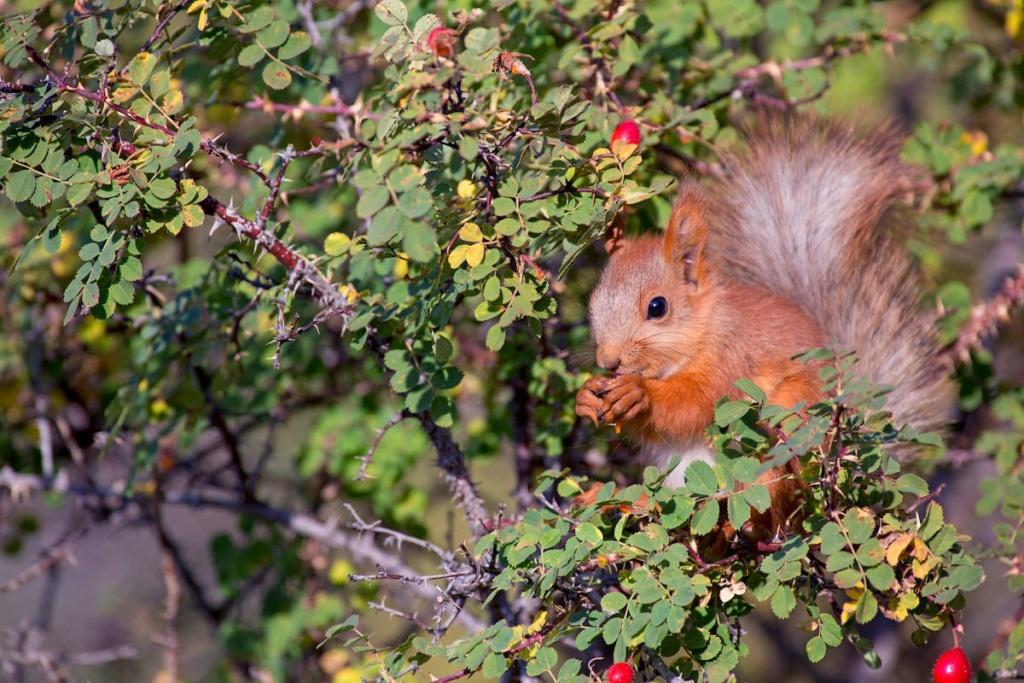Фотографии животных в природе с обязательным указанием автора Jhz_an10