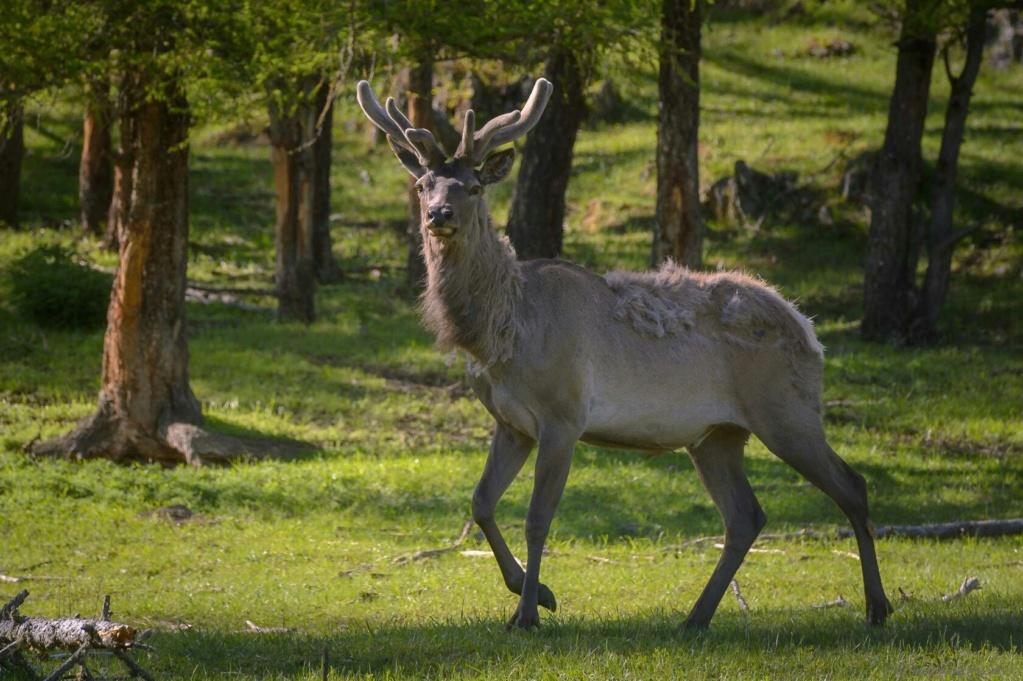 Фотографии животных в природе с обязательным указанием автора Mwudpn10