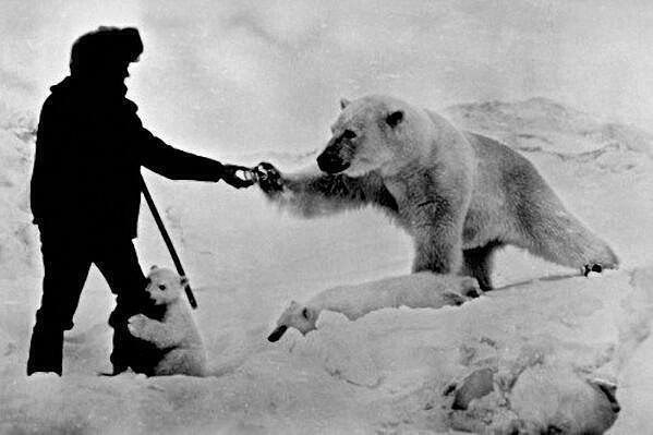 Белые медведи на фото с человеком Ozweiz10