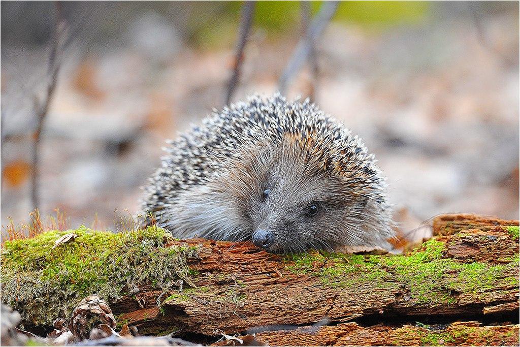 Фотографии животных в природе с обязательным указанием автора Pmvrld10