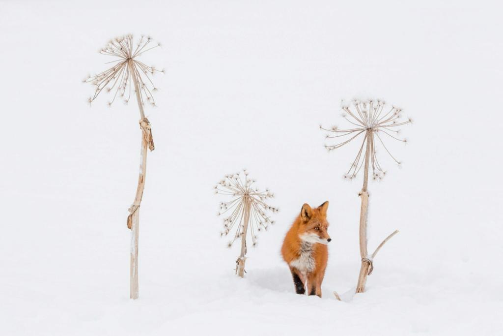 Фотографии животных в природе с обязательным указанием автора Rr7qrq10