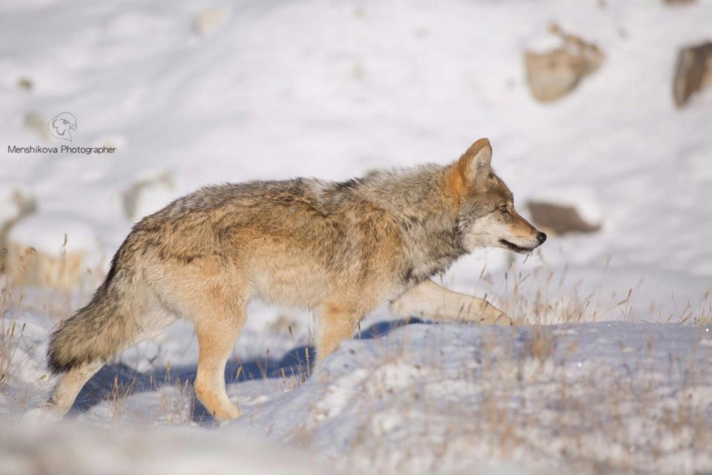 Фотографии животных в природе с обязательным указанием автора Tfqr8u10