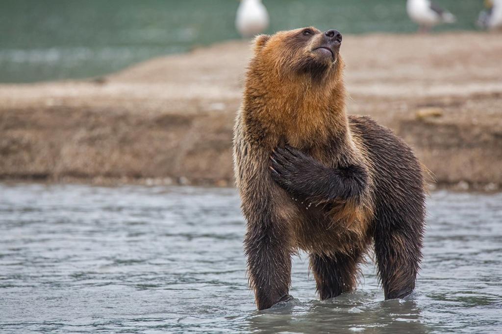 Фотографии животных в природе с обязательным указанием автора Uurp8d10