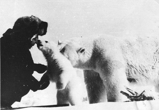Белые медведи на фото с человеком Wfl3ka10