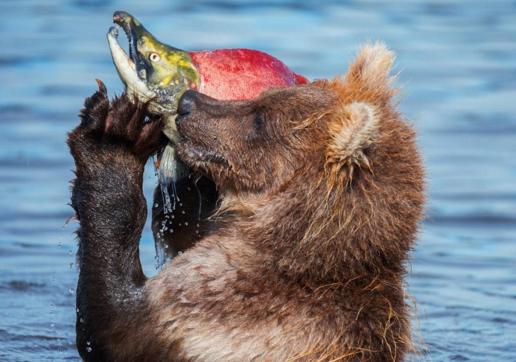 Фотографии животных в природе с обязательным указанием автора Wiciph10