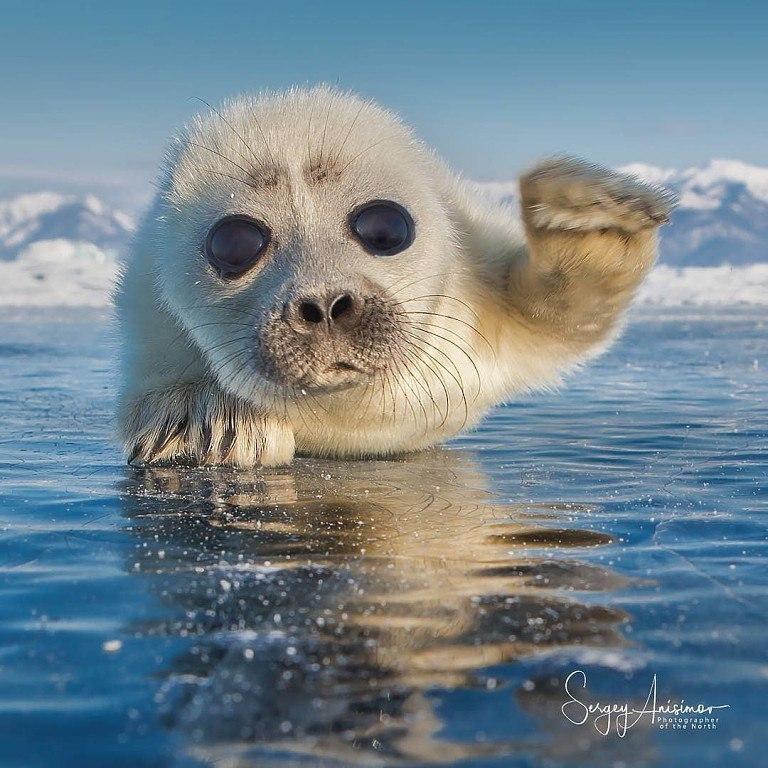Фотографии животных в природе с обязательным указанием автора Xgbimu10