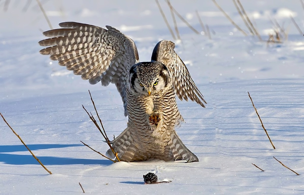 Фотографии животных в природе с обязательным указанием автора Xlwbr_10