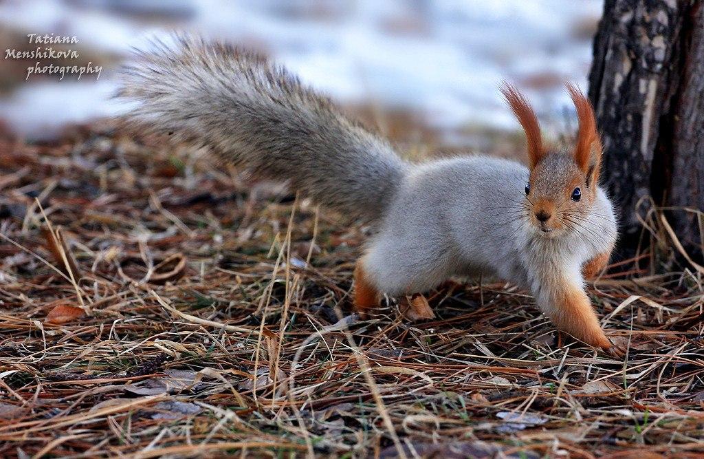 Фотографии животных в природе с обязательным указанием автора Xs3bnm10