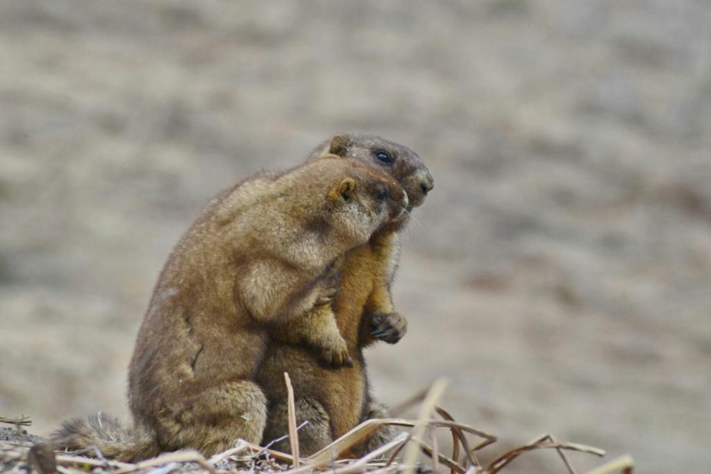 Фотографии животных в природе с обязательным указанием автора Zzuw-710