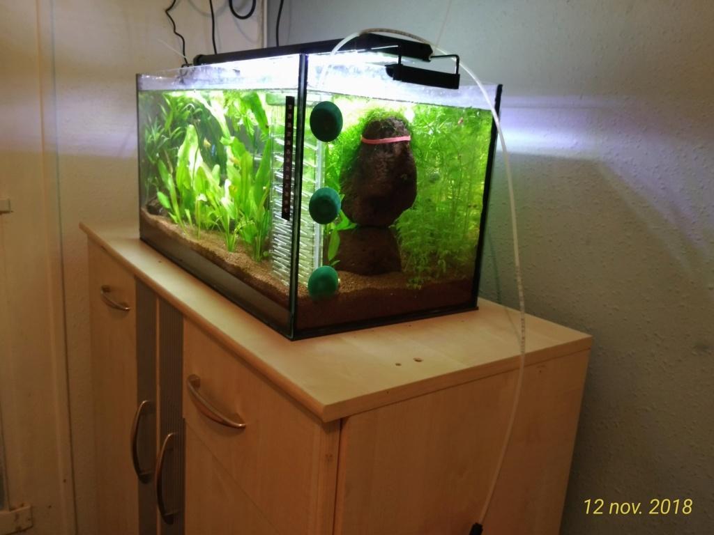 Nouveau venu dans le monde de l'aqua <My first Aquarium 12111812