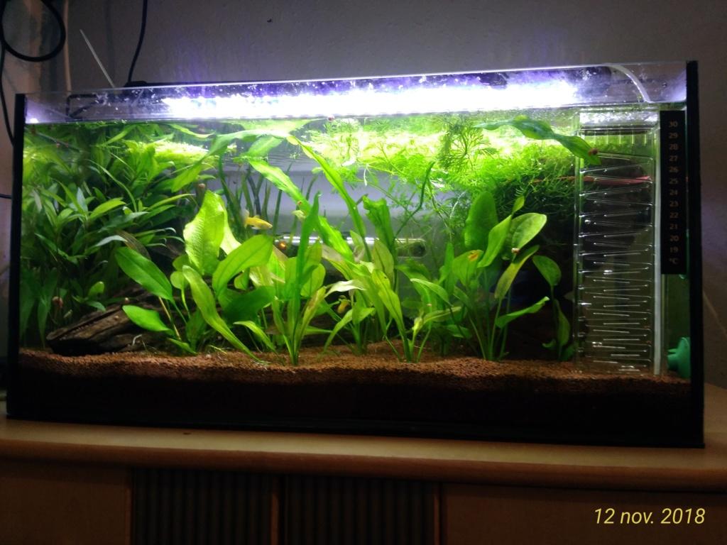 Nouveau venu dans le monde de l'aqua <My first Aquarium 12111813