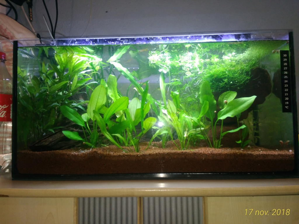 Nouveau venu dans le monde de l'aqua <My first Aquarium Ap171110