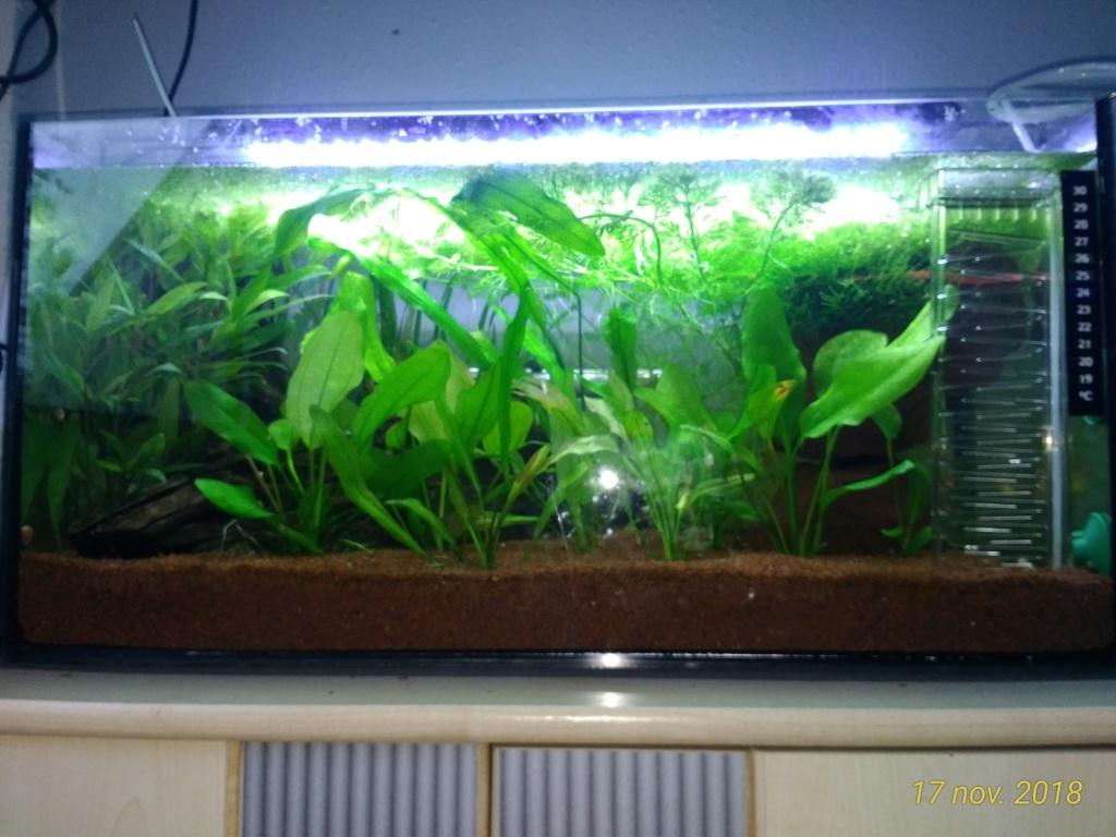 Nouveau venu dans le monde de l'aqua <My first Aquarium Avt17110