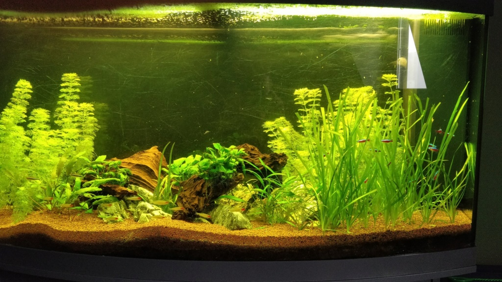 [1-Aquario] Bac 260L - Biotope Amazonien  Aquari10