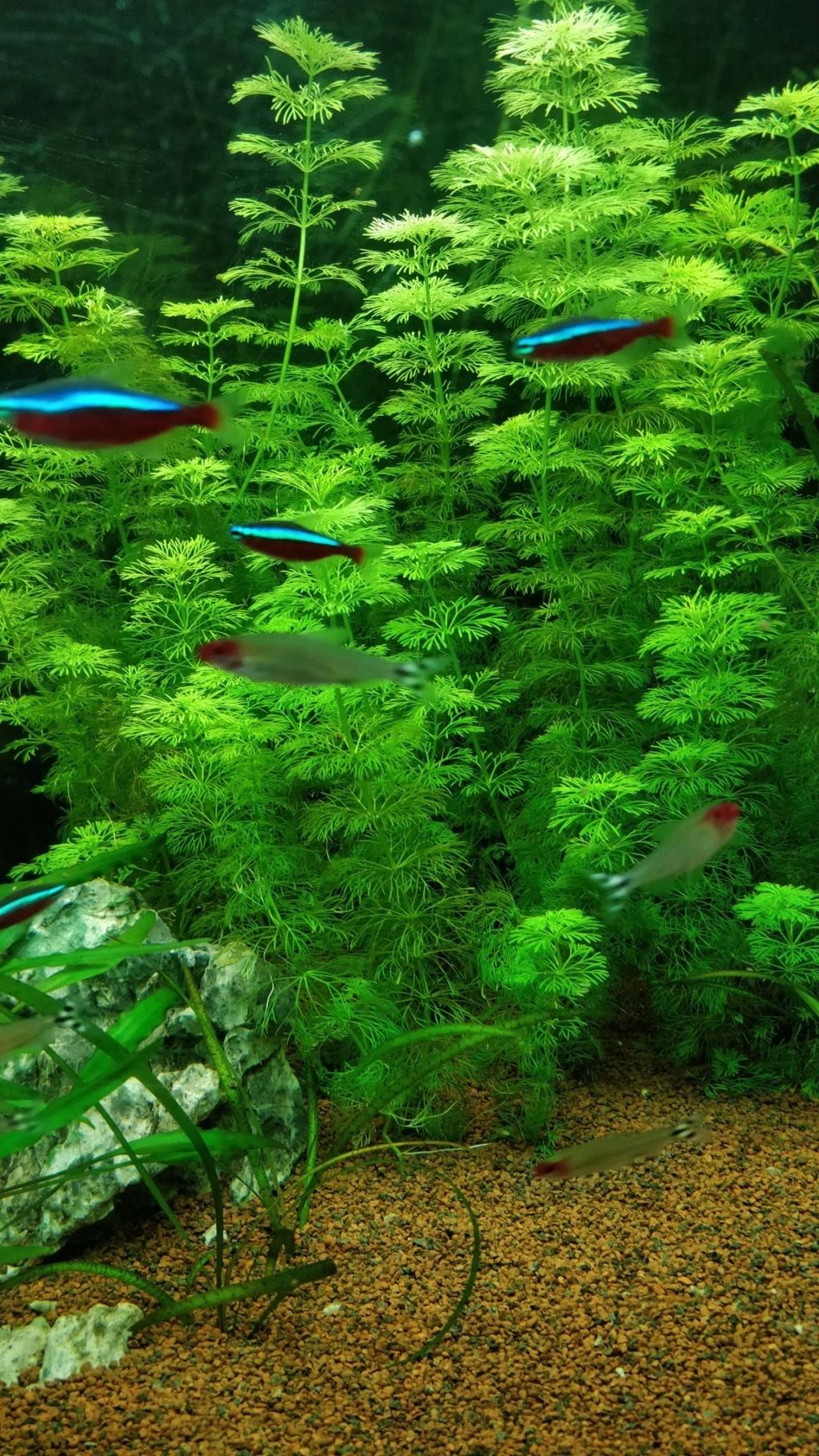 [1-Aquario] Bac 260L - Biotope Amazonien  Aquari15