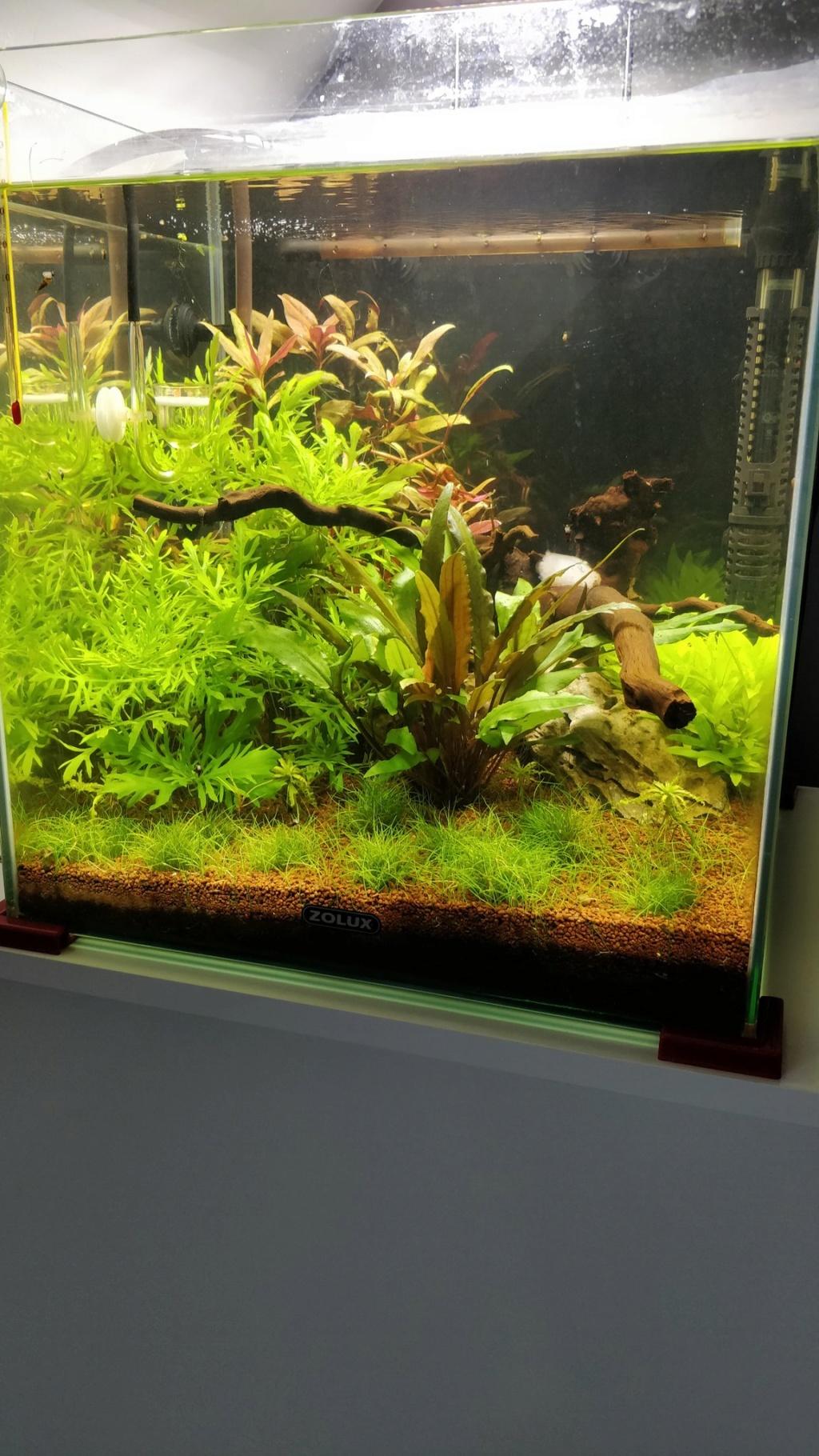 [2-Aquario] Bac 50L - Biotope Asiatique C6nga-10