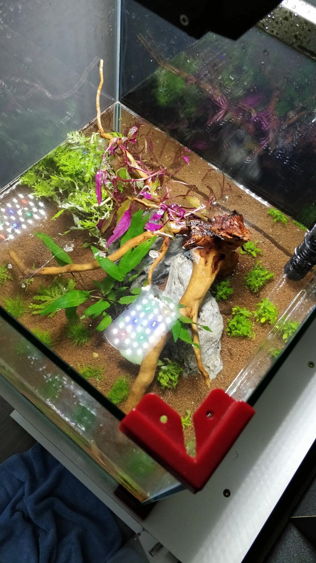 [2-Aquario] Bac 50L - Biotope Asiatique Iywxo510