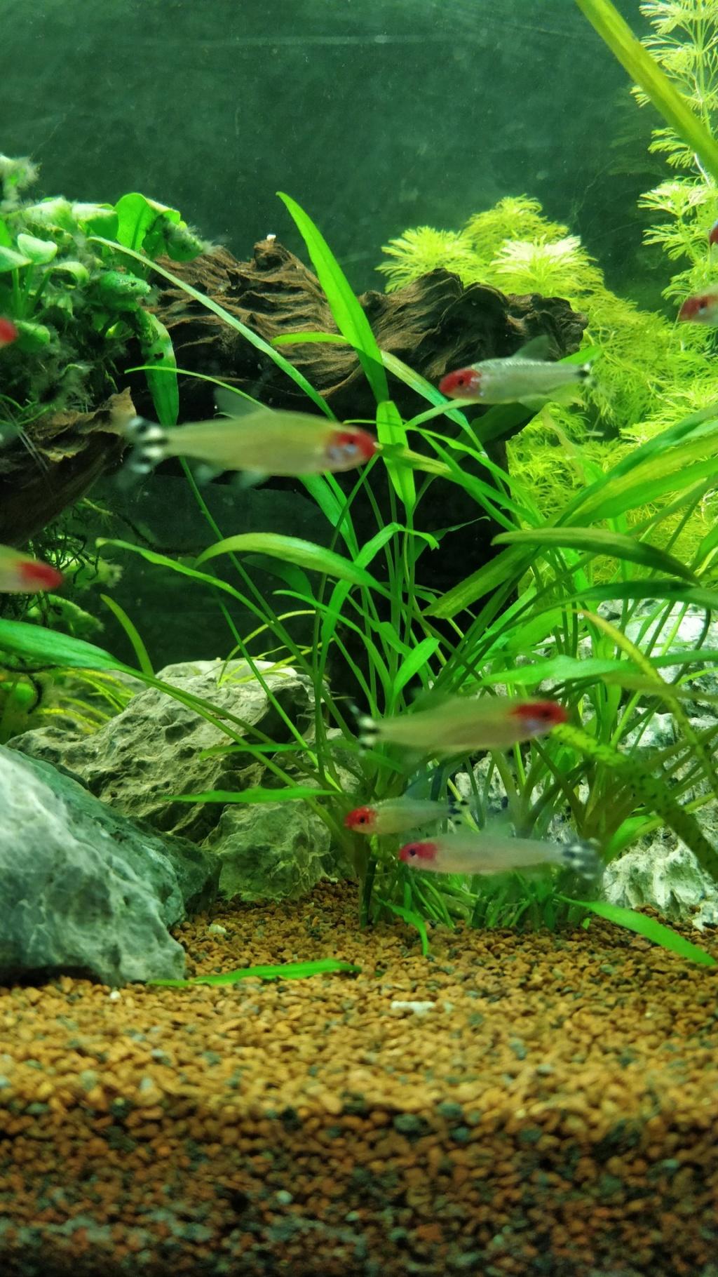 [1-Aquario] Bac 260L - Biotope Amazonien  Nez_ro11