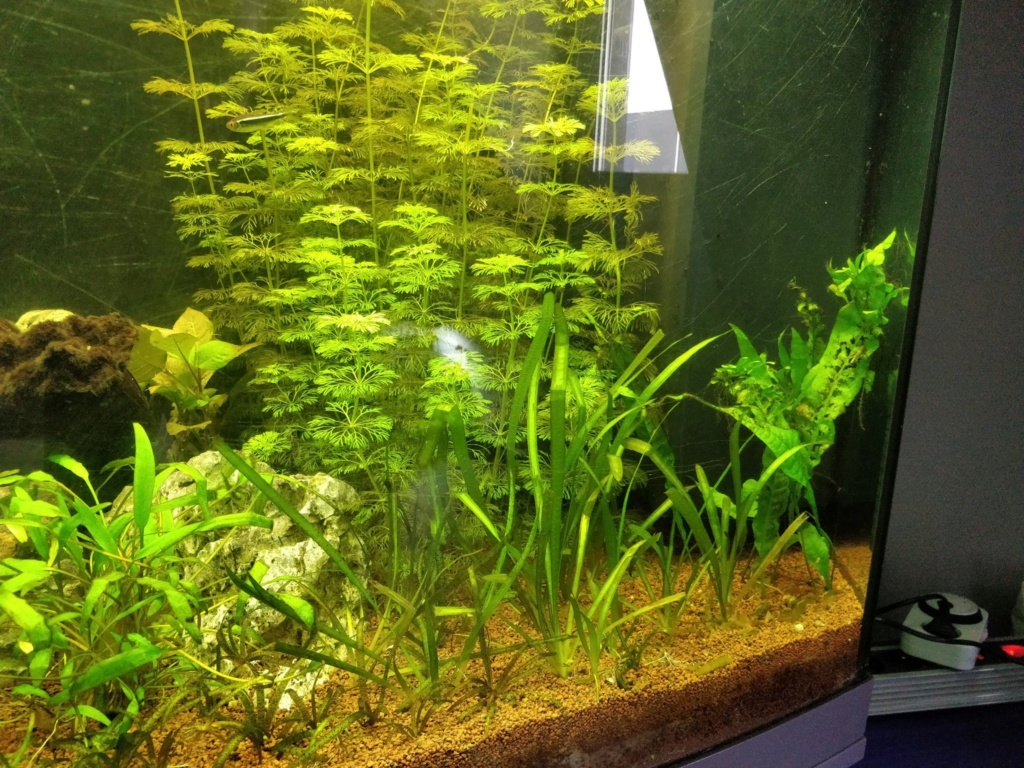 [1-Aquario] Bac 260L - Biotope Amazonien  Origin13