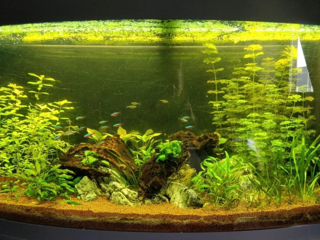 [1-Aquario] Bac 260L - Biotope Amazonien  Origin14
