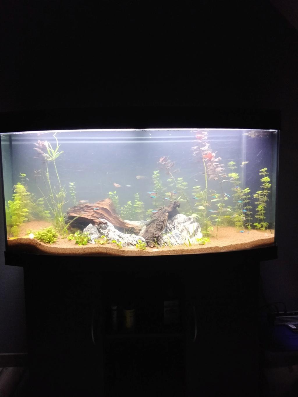 [1-Aquario] Bac 260L - Biotope Amazonien  Origin15