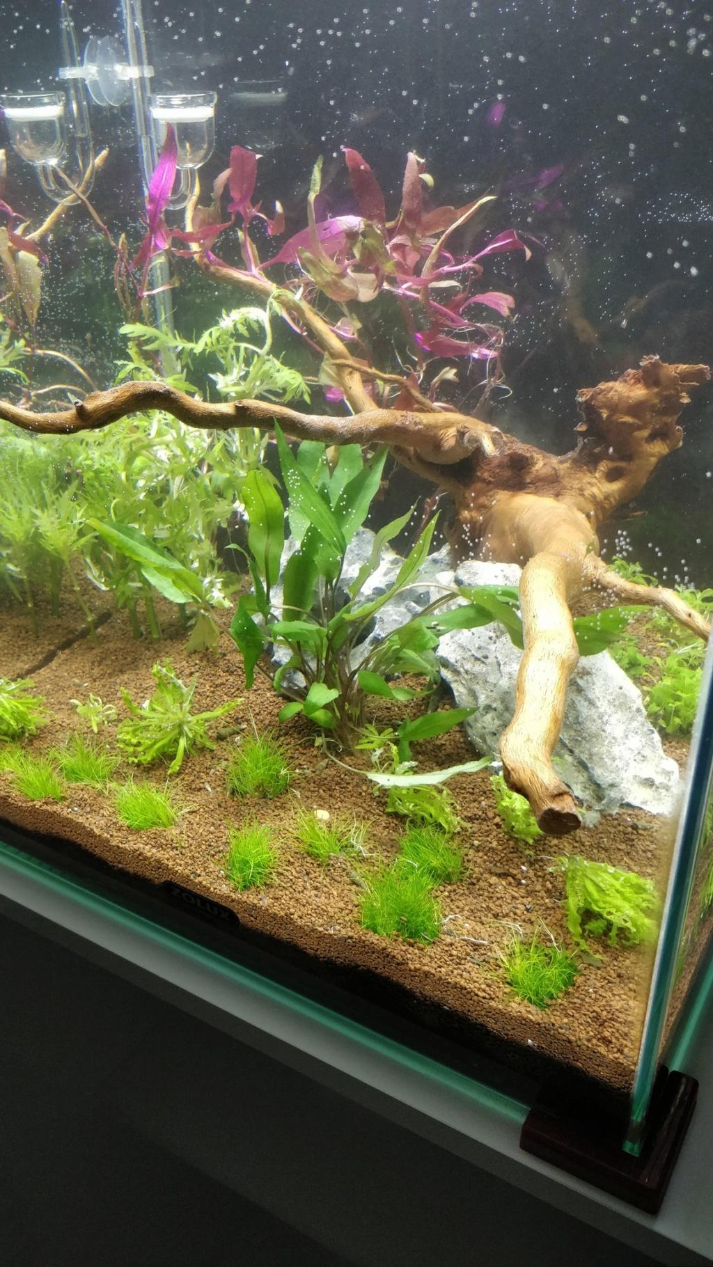 [2-Aquario] Bac 50L - Biotope Asiatique Qkz2lg10