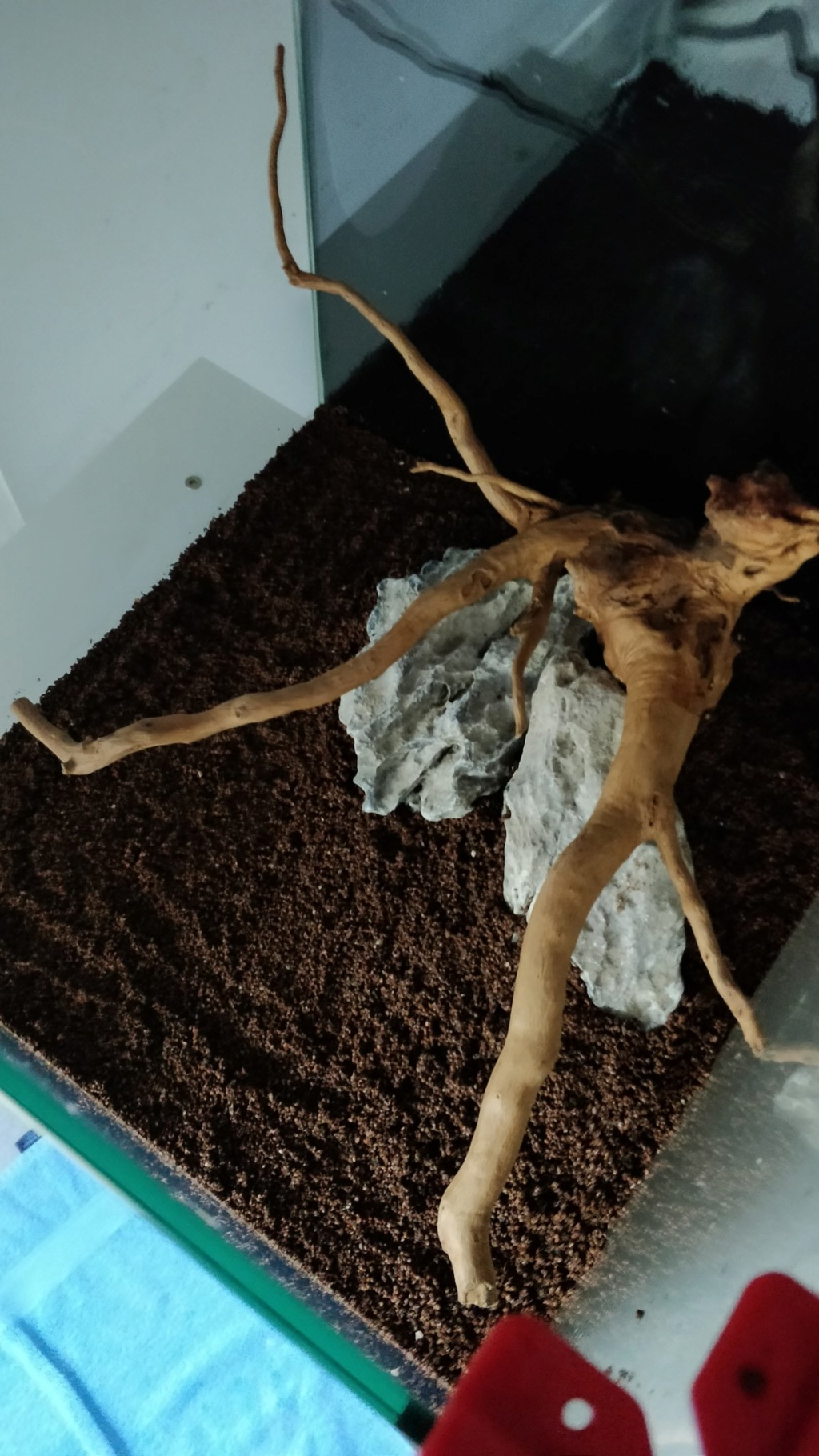 [2-Aquario] Bac 50L - Biotope Asiatique Ufqgsy10